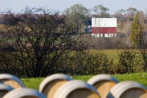 Prince Edward County Vineyards